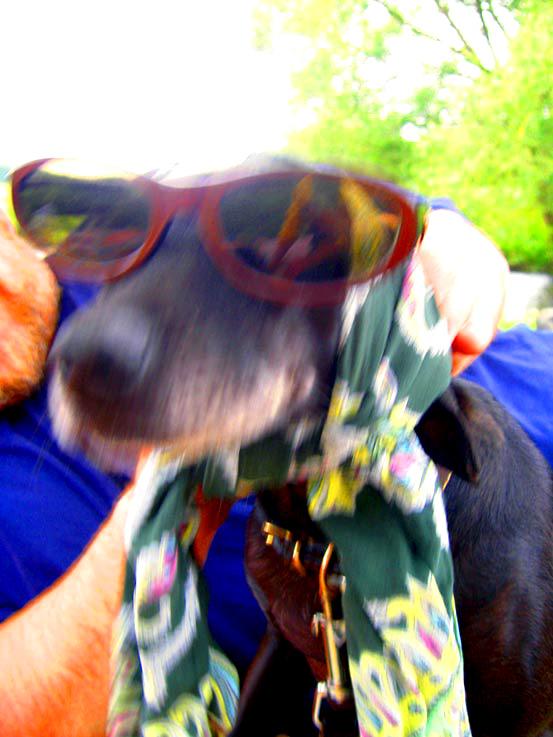 chien à lunettes