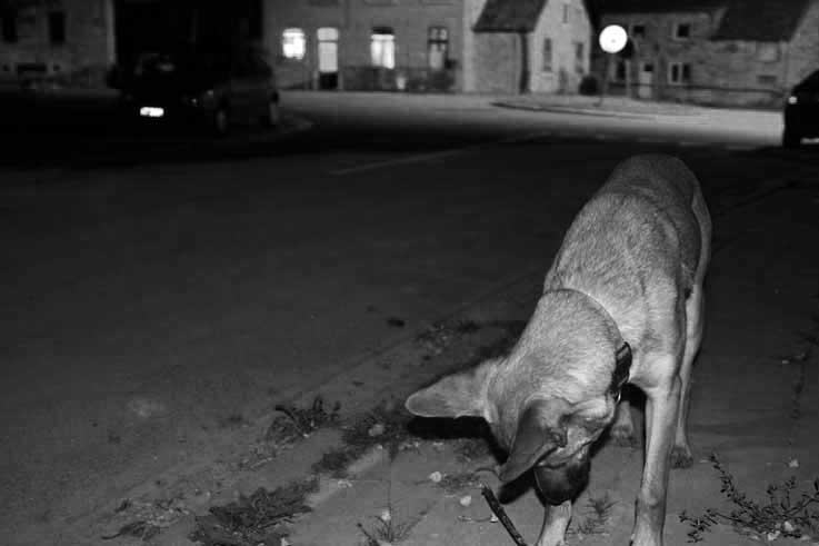 photo chien, nuit