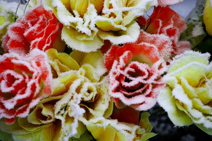 roses en plastique, neige, cimetière, photo dominique houcmant, goldo graphisme
