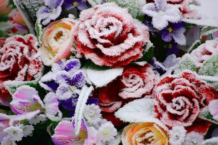 roses en plastique, cimetière d'ougrée, photo dominique houcmant, goldo graphisme