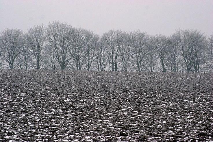 paysage champs et arbres sous la neige, La Salle, Rotheux rimière, photo dominique houcmant, goldo graphisme