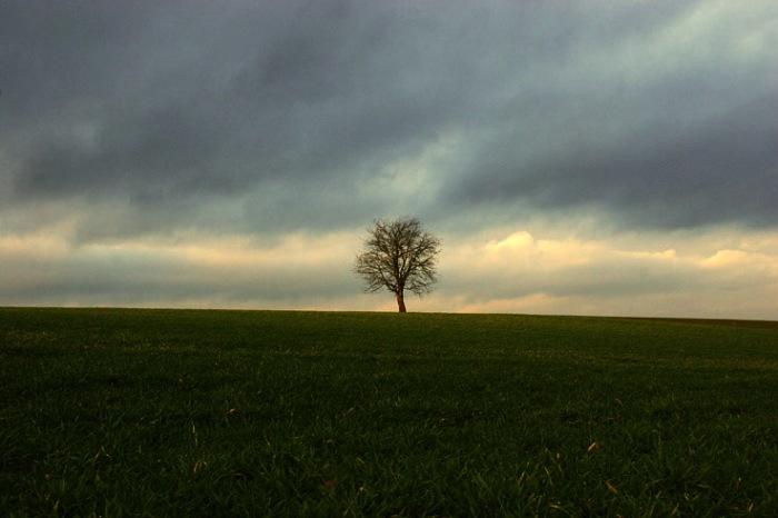 arbre solitaire sur la colline, Tree Upon The Hill, photo dominique houcmant, goldo graphisme