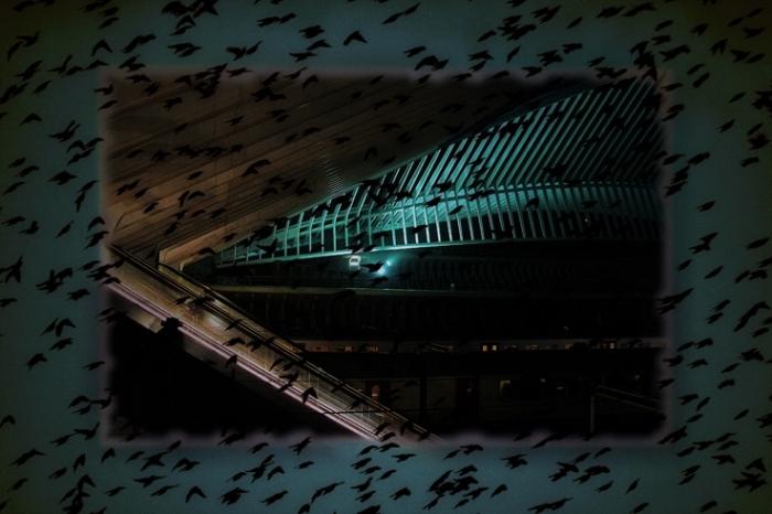 variation sur la gare des Guillemins, Liège, architecte santiago calatrava, vue de nuit, © photo dominique houcmant