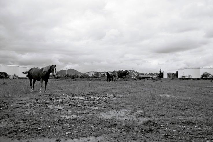 zoning industriel de Wandre, port pétrolier, chevaux, photo dominique houcmant, goldo graphisme
