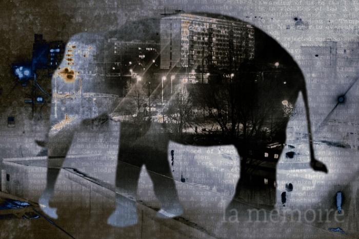 la mémoire, éléphant, bestiaire, création, © photo dominique houcmant