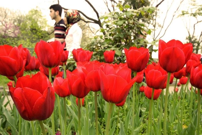 tulipe, topkapi, Gülhane parc, park, tulip, Istanbul, Turquie, Turkey, les amoureux dans les fleurs, © photo dominique houcmant