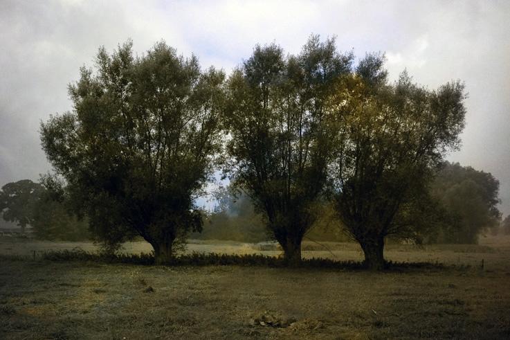 arbres, prairie, noir et blanc colorisé dans photoshop, photo dominique houcmant, goldo graphisme