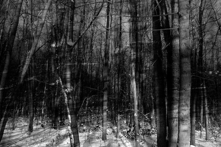 foret en hiver, sous-bois, forest in winter, photo dominique houcmant, goldo graphisme