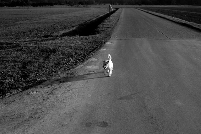 chien sur une route, dog on the road, photo dominique houcmant