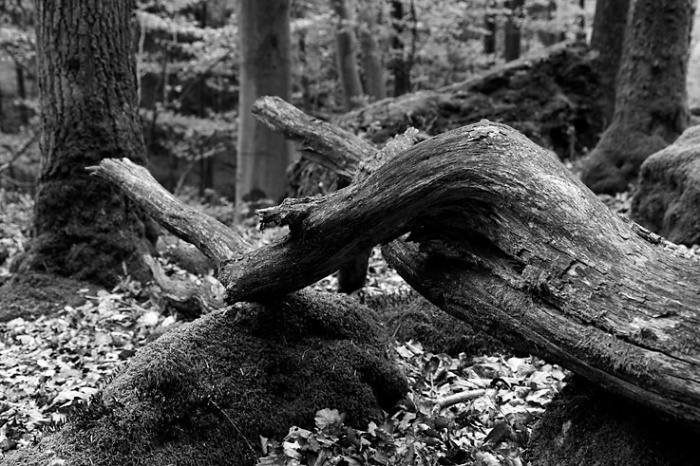 odalisque, femme couchée, jambes, bois, arbre, tronc, Anthropomorphisme, tronc d'arbre en forme de femme, foto, photo dominique houcmant, goldo graphisme