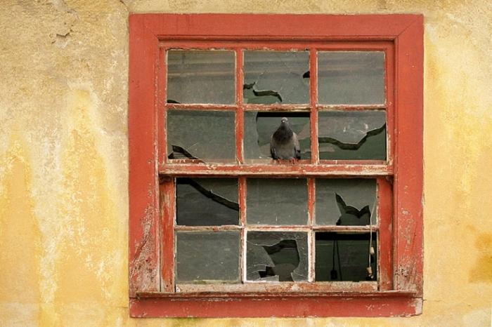 pigeon, fenêtre rouge, red wibdow, oiseau, bird, photo dominique houcmant, goldo graphisme