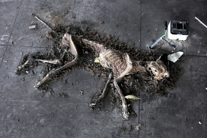 carcasse, chat, squelette, cat, carcass, skeleton, photo dominique houcmant, goldo graphisme