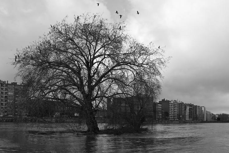 petite île, îlot sur la Meuse, parc de la Boverie, Liège, Belgique, nameless island, photo dominique houcmant, goldo graphisme
