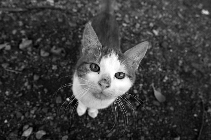 chat, portrait, cat, photo dominique houcmant, goldo graphisme