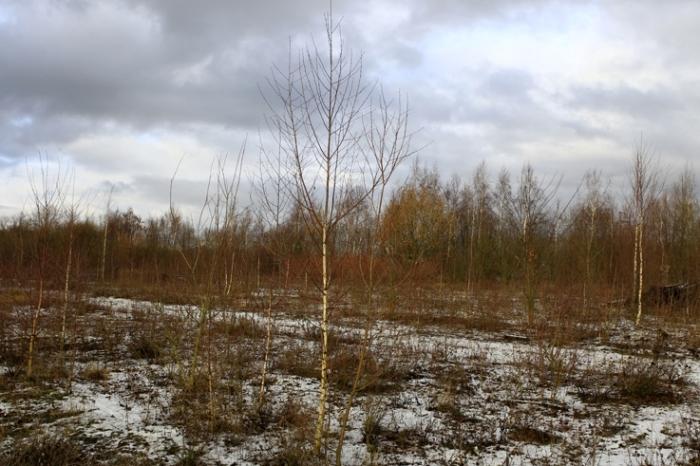 premiere neige, arbres, bouleaux, first snow in the birch trees, voroux-goreux, photo dominique houcmant, goldo graphisme