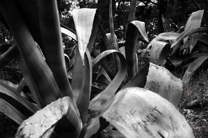 agaves sur le Mont Lycabette, Athènes, Grèce, Path of agaves over the Lycabettos Hill, Athens Greece, photo dominique houcmant, goldo graphisme