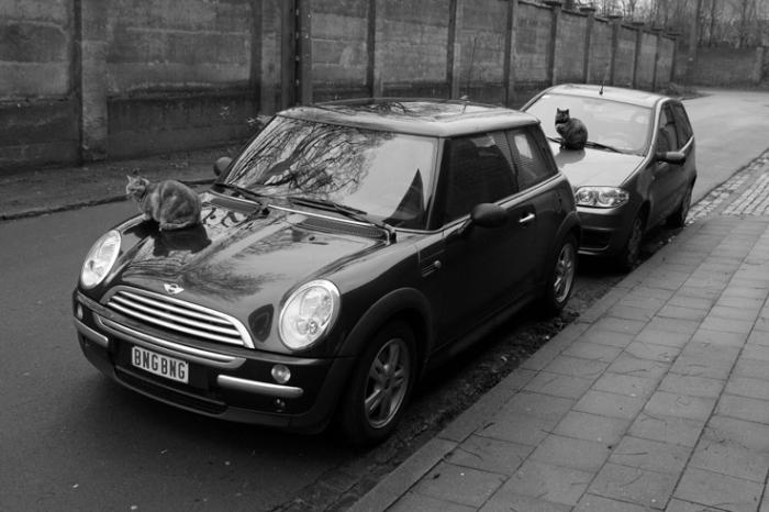 chats sur le capot d'une voiture, Cats on the hood of a car,  photo dominique houcmant, goldo graphisme