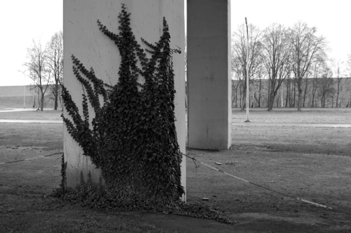lierre grimpant sur un pilier du plan incliné de Ronquieres Belgique, hedera helix, Common Ivy on a pillar, photo dominique houcmant, goldo graphisme