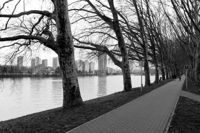 allée de platanes quai de wallonie, Coronmeuse, plane trees alley along the river, Liège, photo dominique houcmant, goldo graphisme