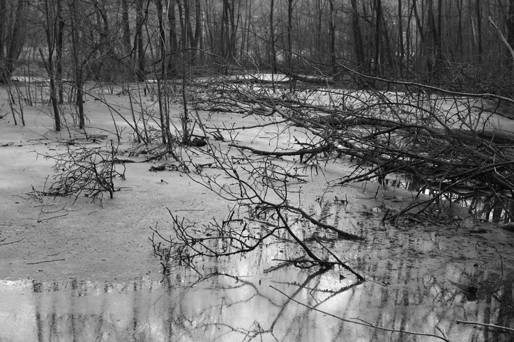 les eaux stagnantes, étang, marais, Stagnant waters in pond, Swamps, © photo dominique houcmant