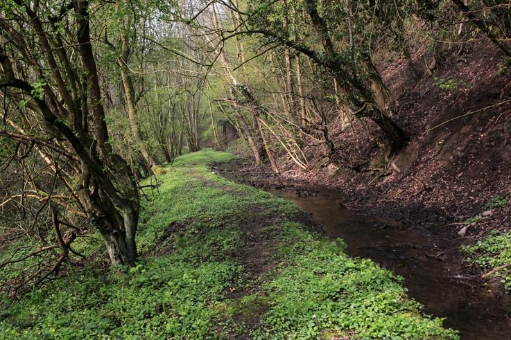 ruisseau de Villencourt, réserve naturelle de rognac, Ivoz, Flémalle, photo dominique houcmant, goldo graphisme