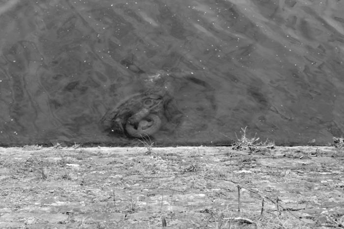 moto volée retrouvée dans le fond de la rivière, stolen motorcycle, photo dominique houcmant, goldo graphisme