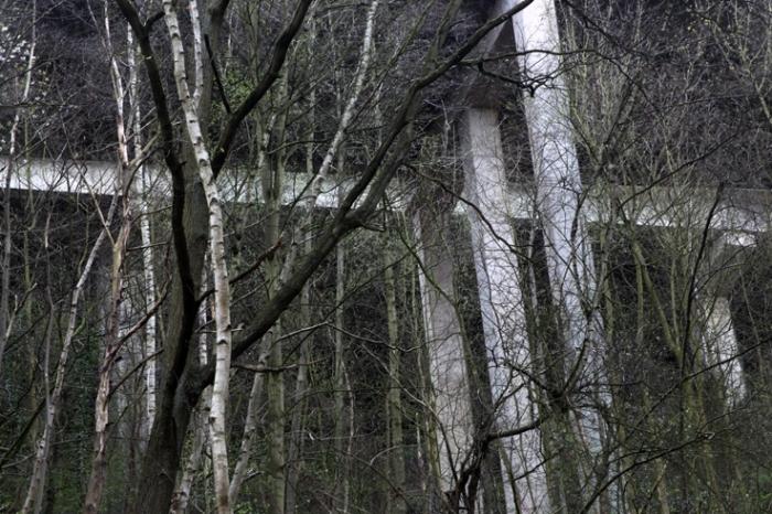 autoroute E25 Tilff, piliers, arbres, photo dominique houcmant