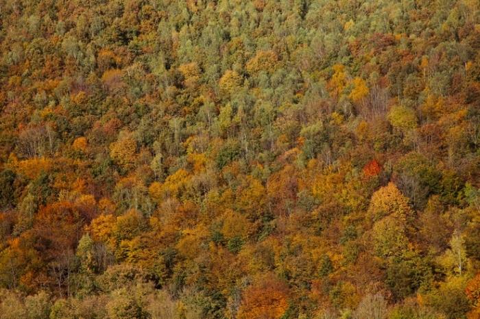 feuillage d'automne, arbres, coteau, Autumn leaf color, fall foliage, trees, paysage, landscape, © photo dominique houcmant