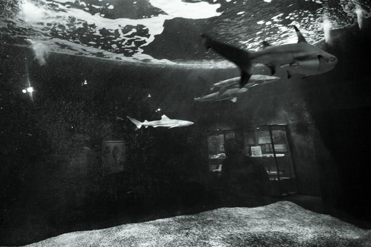 le bassin aux requins, aquarium museum dubuisson, liège, Sharks basin, © photo dominique houcmant