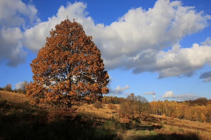 la lande de Streupas, Angleur, paysage, arbre, automne, photo dominique houcmant, goldo graphisme