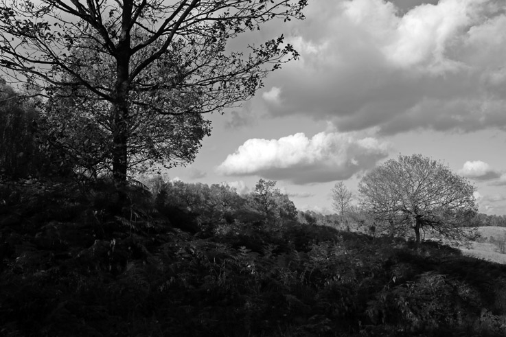 la lande de Streupas, Angleur, paysage, arbre, fougères, automne, photo dominique houcmant, goldo graphisme
