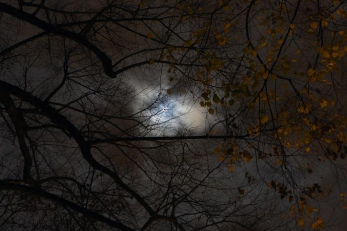 la lune dans les branches d'arbres, ciel, nuage, moon between the trees, sky, clouds, photo dominique houcmant, goldo graphisme