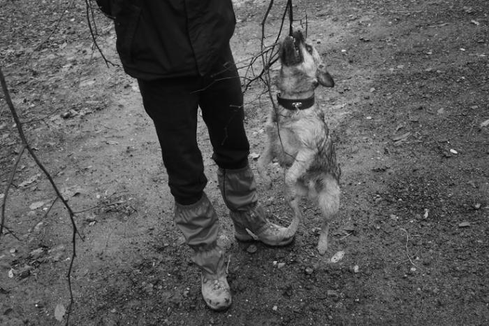 un homme joue avec un chien et un bois, dog playing fetch, photo dominique houcmant, goldo graphisme