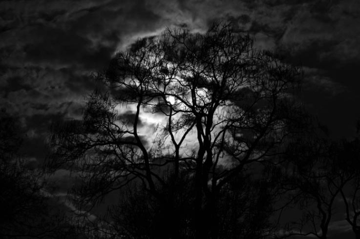 pleine lune à travers les branches d'un arbre, ciel, nuage, wienner prater, vienne, vienna, full moon in a trees, sky, clouds, photo dominique houcmant, goldo graphisme